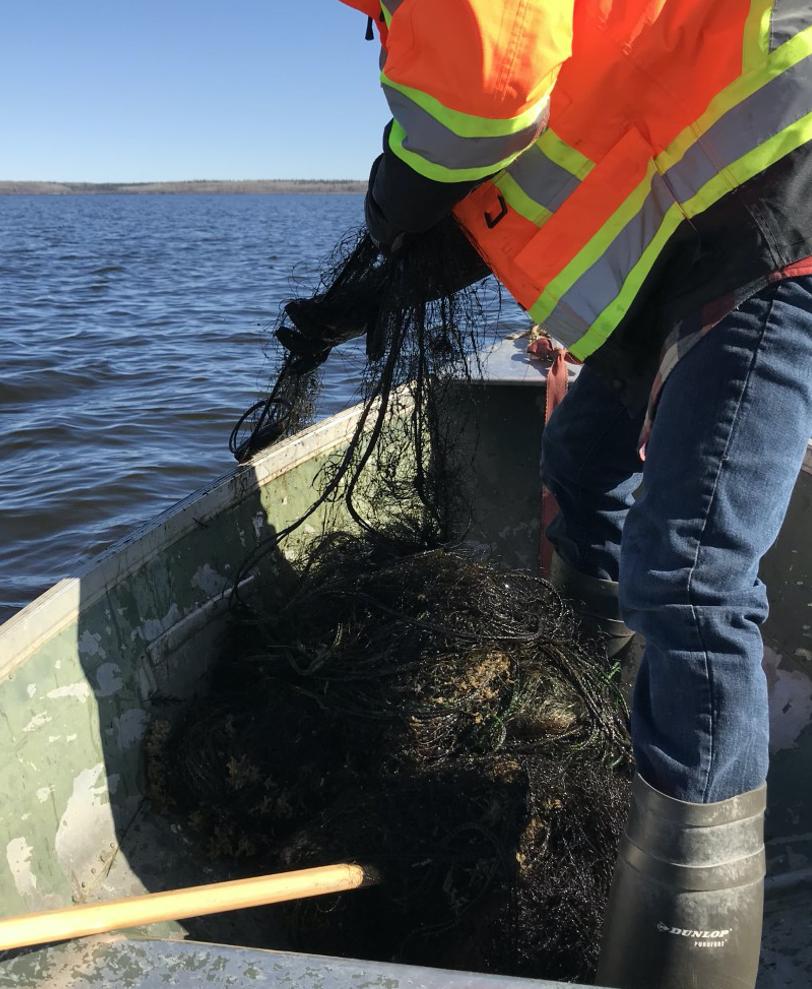 Youth pulls abandoned gill net from Utikumasis Lake during lake sweep