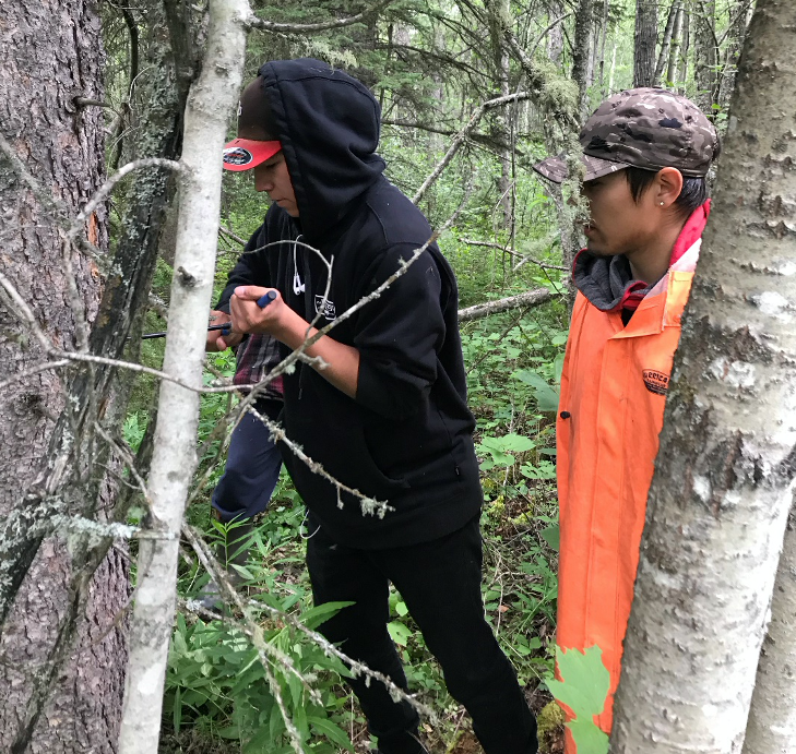 Youth use an increment borer to find the age of a tree